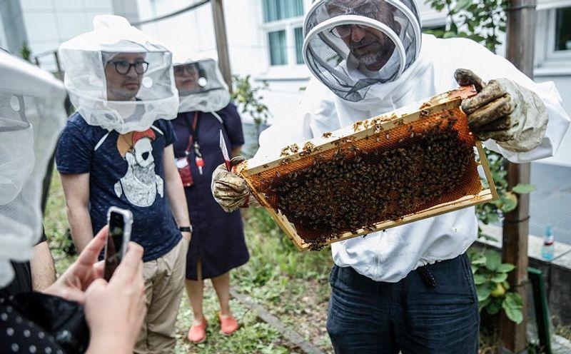 Mehre Personen stehen um einen Imker, der ihnen die Bienenwaben zeigt