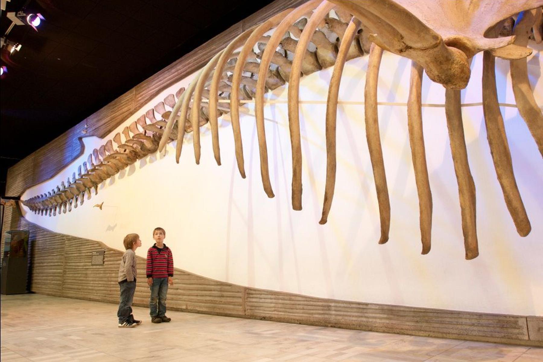 zwei Kinder stehen vor einer Wand, an der ein Dinosaurier Skelett hängt