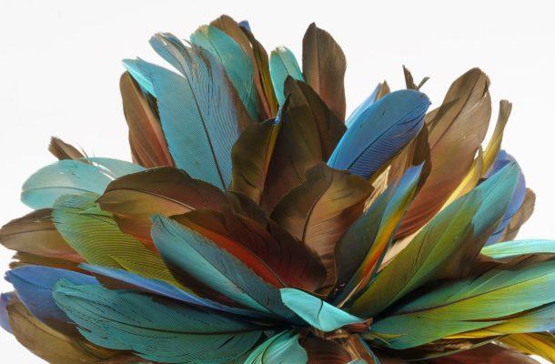 Mehrere Federn in den Farben Braun, Grün, Blau