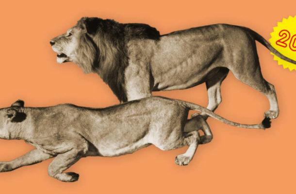 Eine Grafik mit freigestellten Löwen auf einem orange farbenen Hintergrund